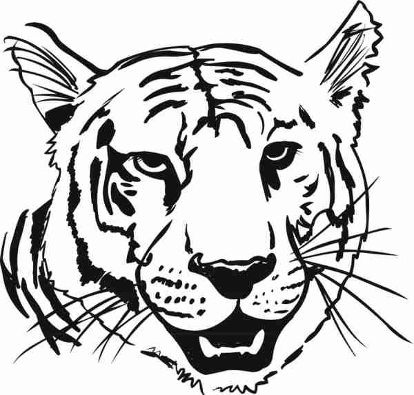 tiger face tigers and coloring pages on pinterest