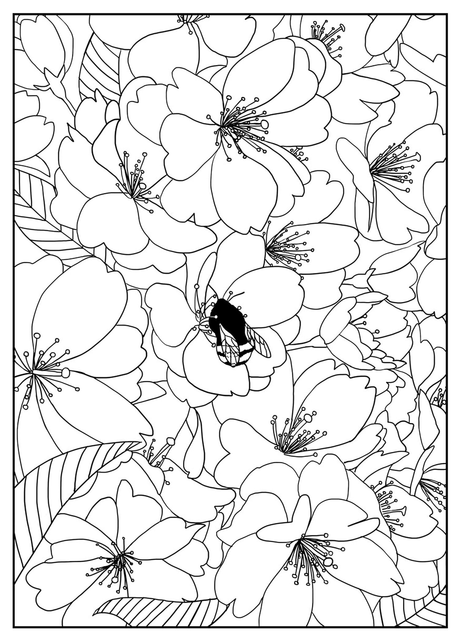 coloring pages cherry tree and coloring on pinterest