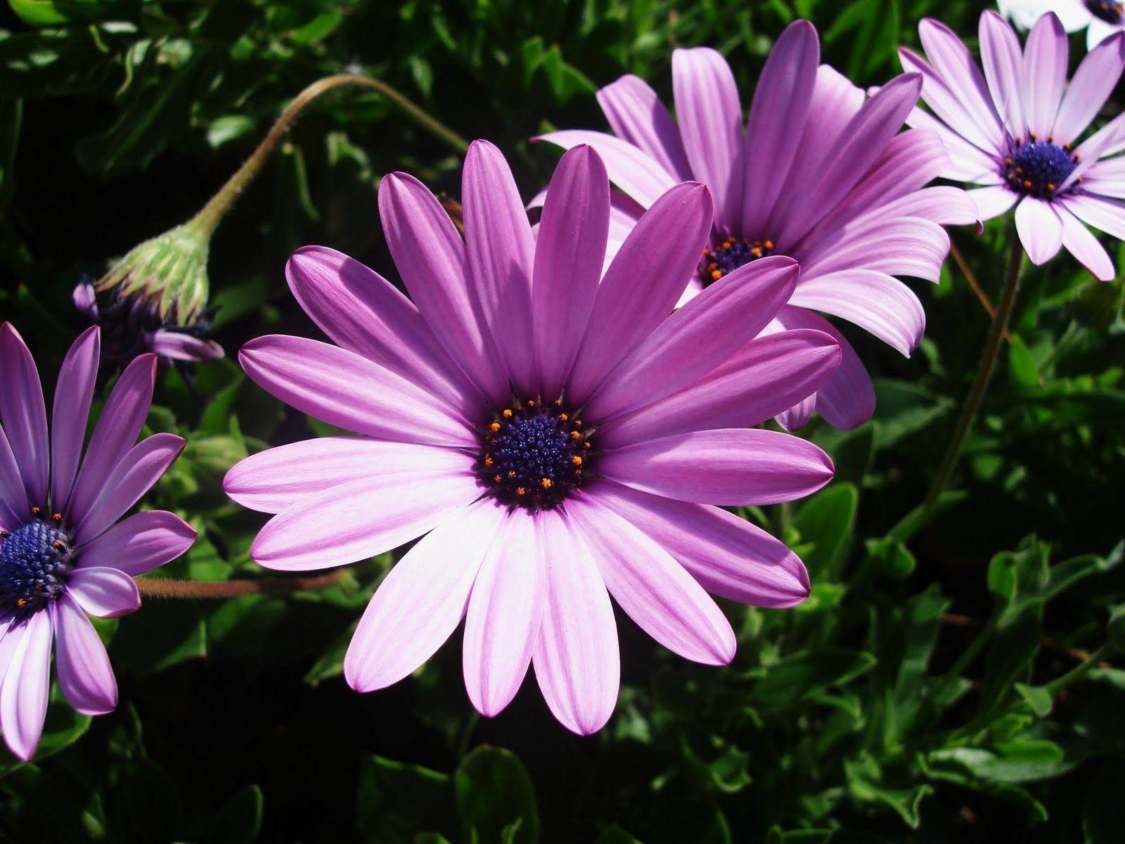 September Birth Flower September Birth Flower tatoos