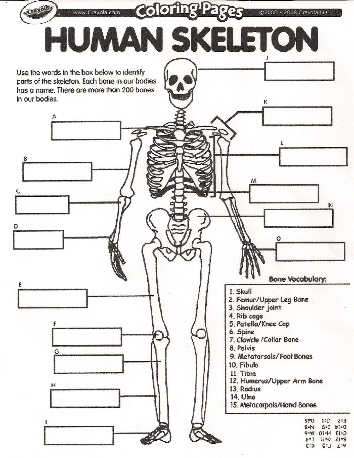 Collection Of Human Skeletal System Worksheets