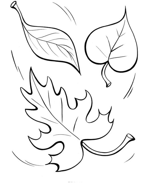 1000 images about fall on pinterest fall coloring pages
