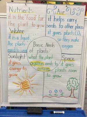 Basic Needs of Plants Ms Hernandez' 2nd Grade Blog | Science 2nd grade | Pinterest | Plants