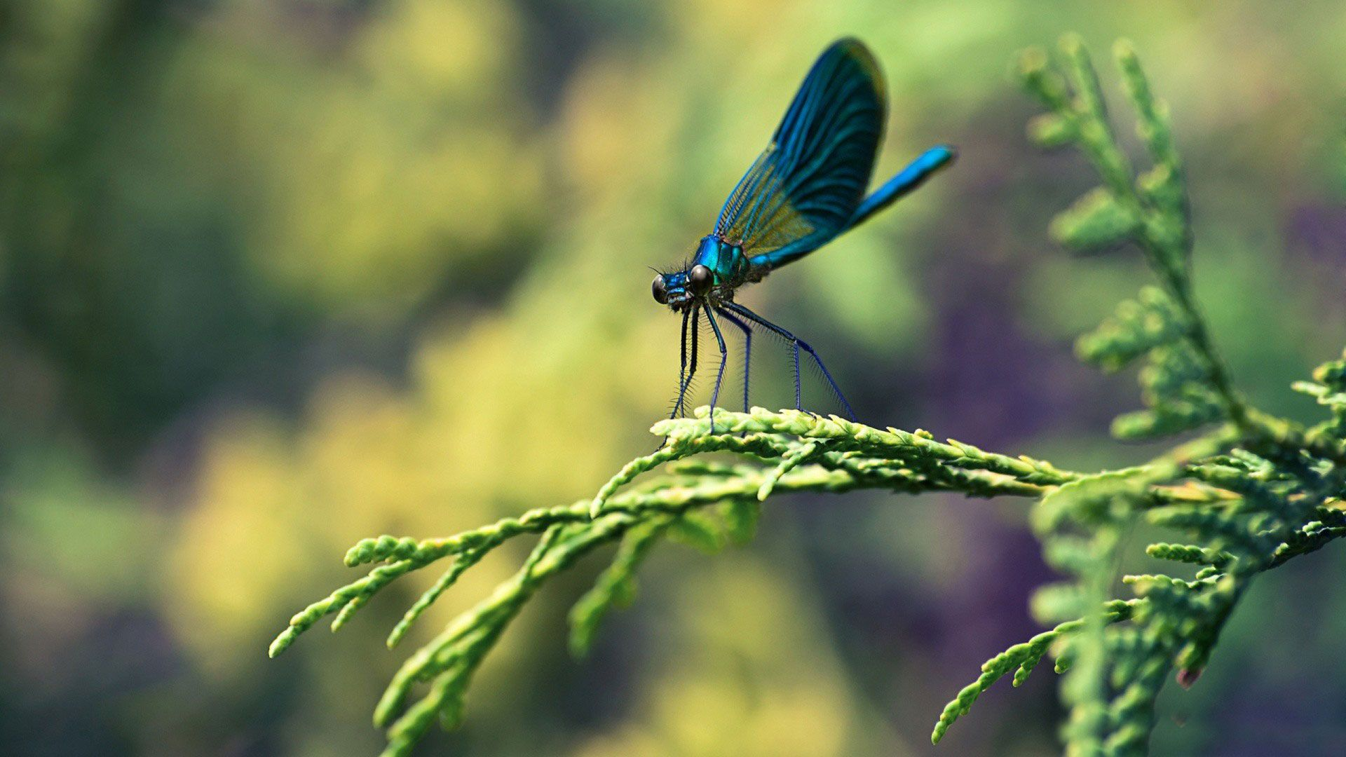 hd pics photos cute dragonfly colorful macro nature hd quality