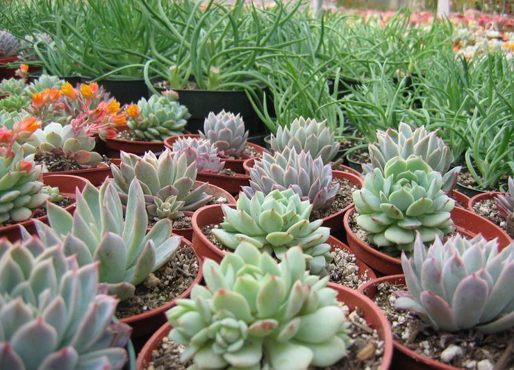 Best 25 Nursery Near Me Plants Ideas On Pinterest