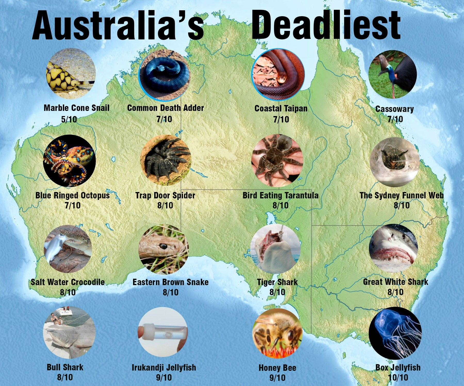 The top 30 Australian dangerous animals. Though sharks