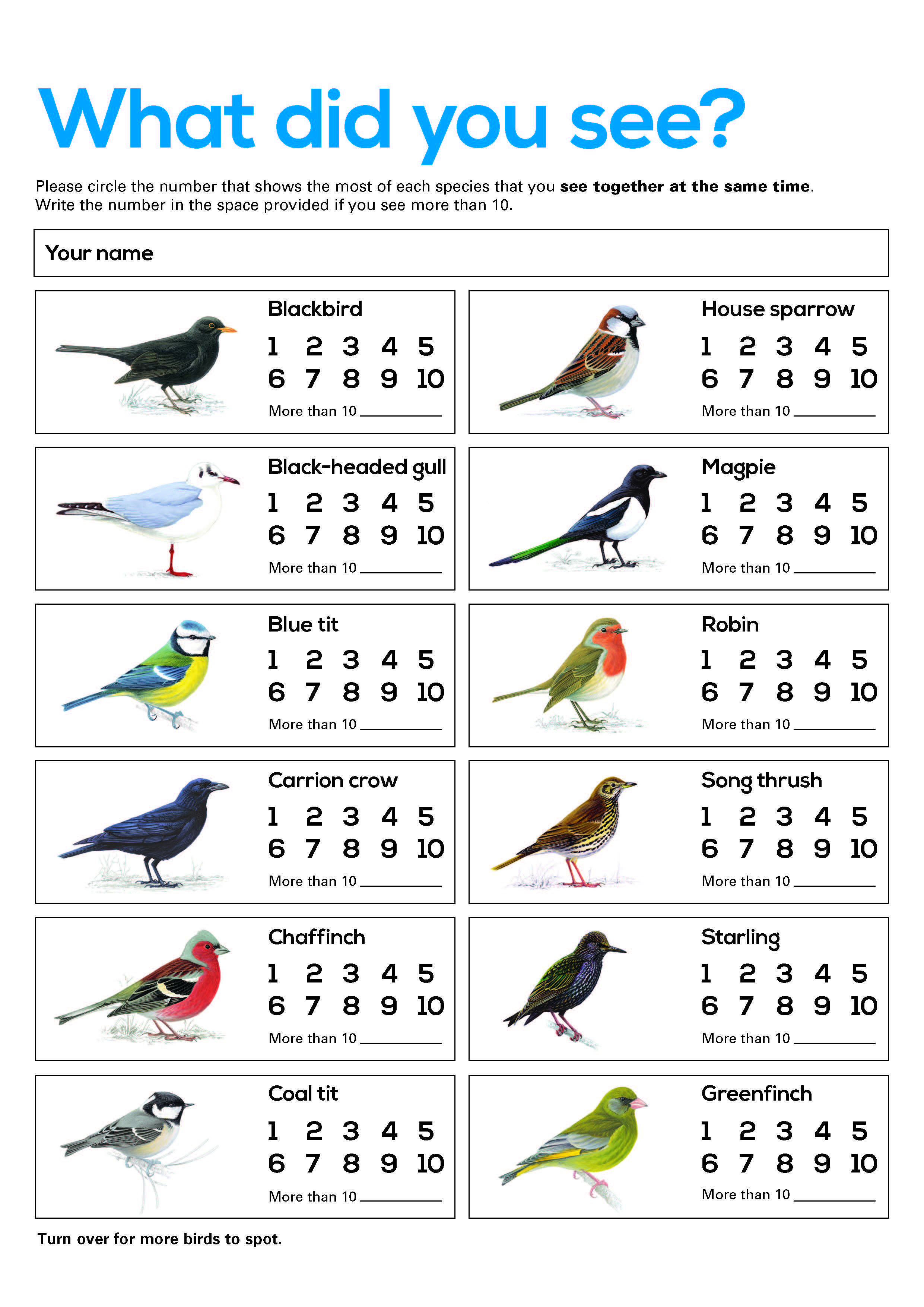Bird Counting Sheet Free Resource For Big Schools