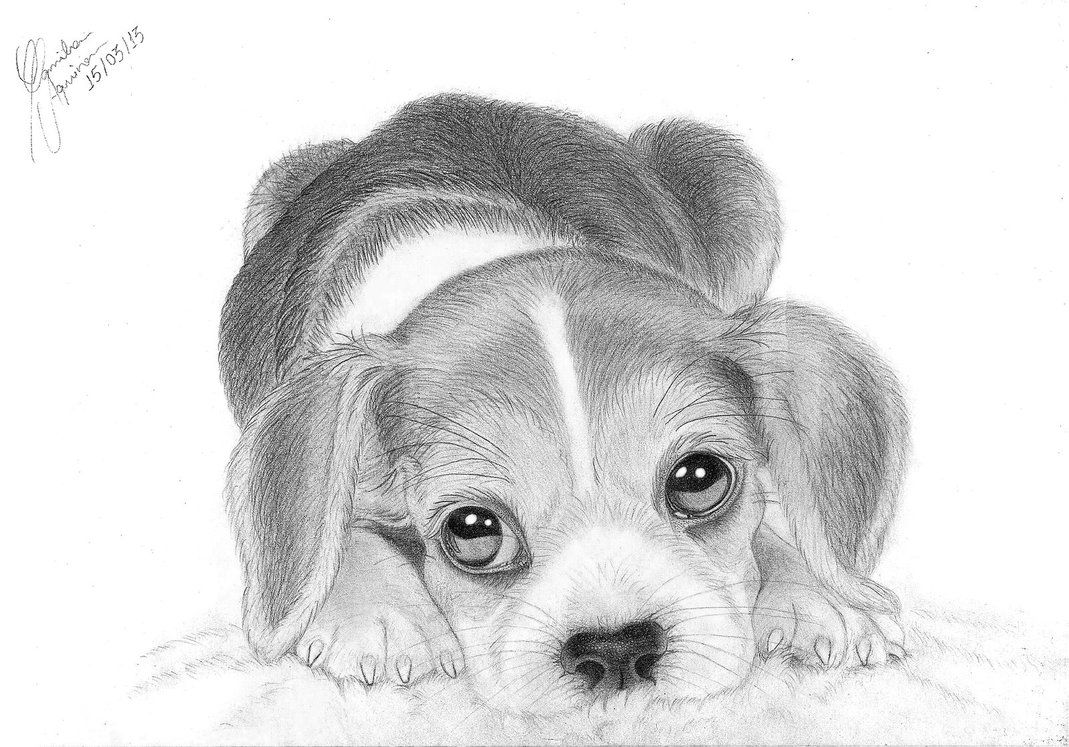 Images For > How To Draw A Realistic Beagle Art