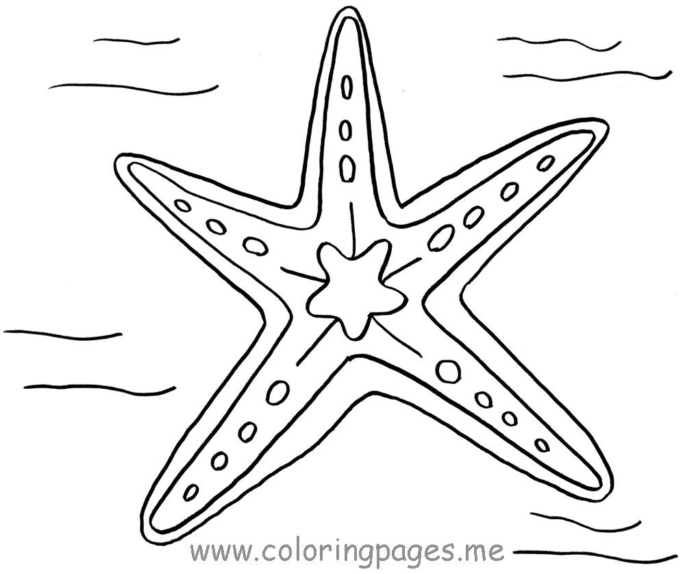 starfish coloring pages and coloring on pinterest