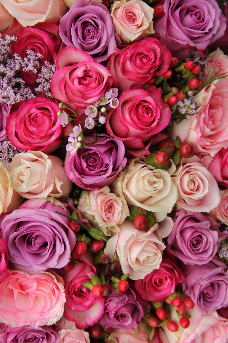 Spring roses Phone Wallpapers Pinterest Rose, Spring
