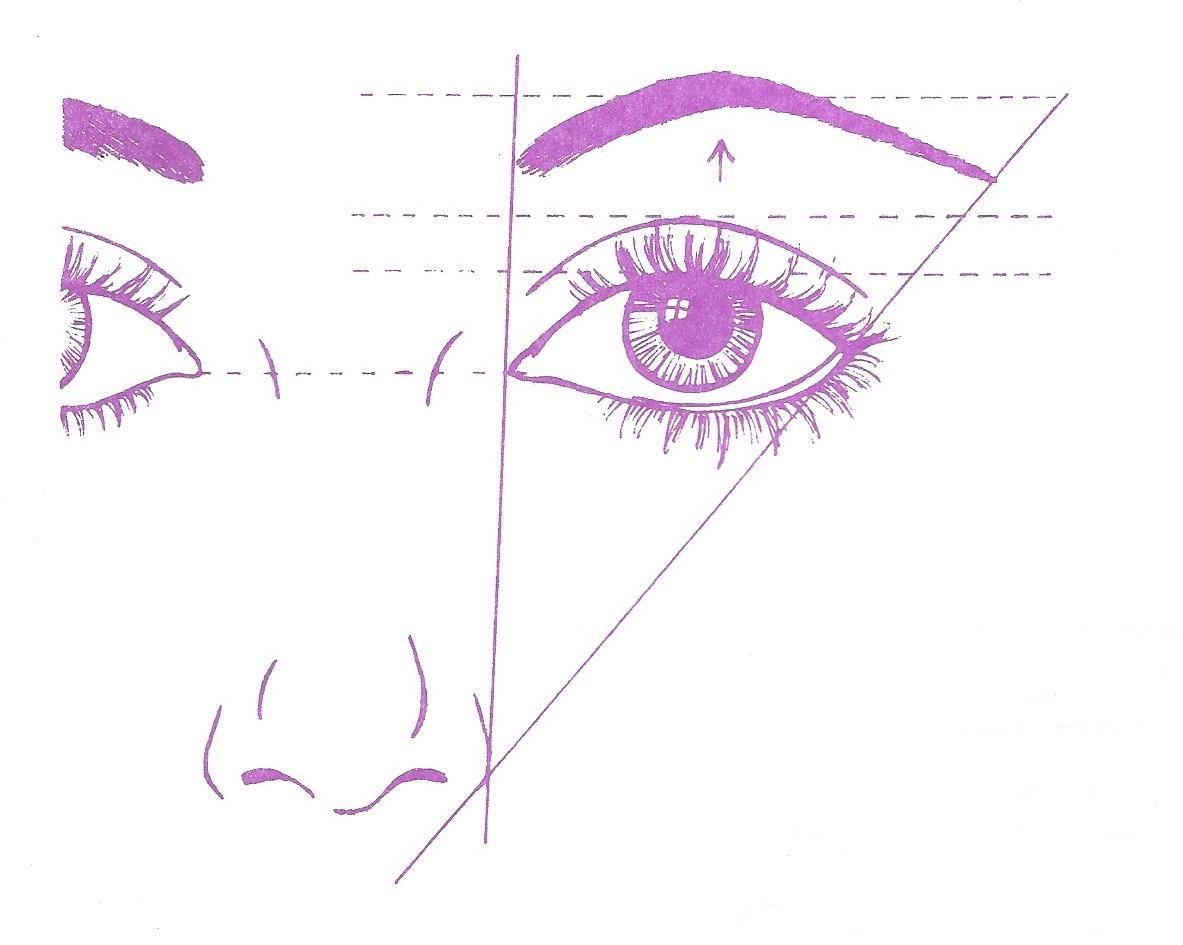 Eye Proportions