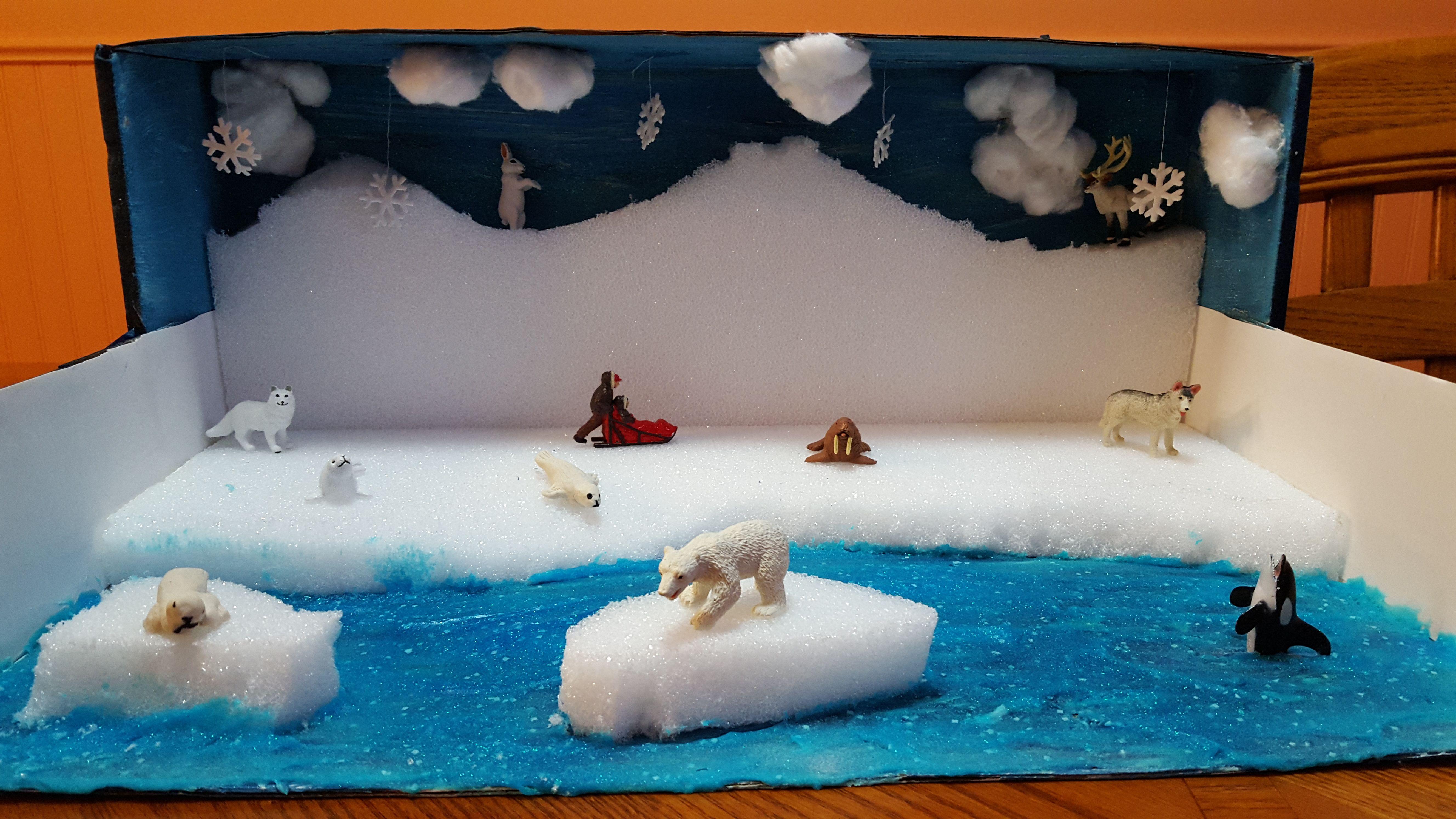 Arctic Seal Diorama Second Grade Project