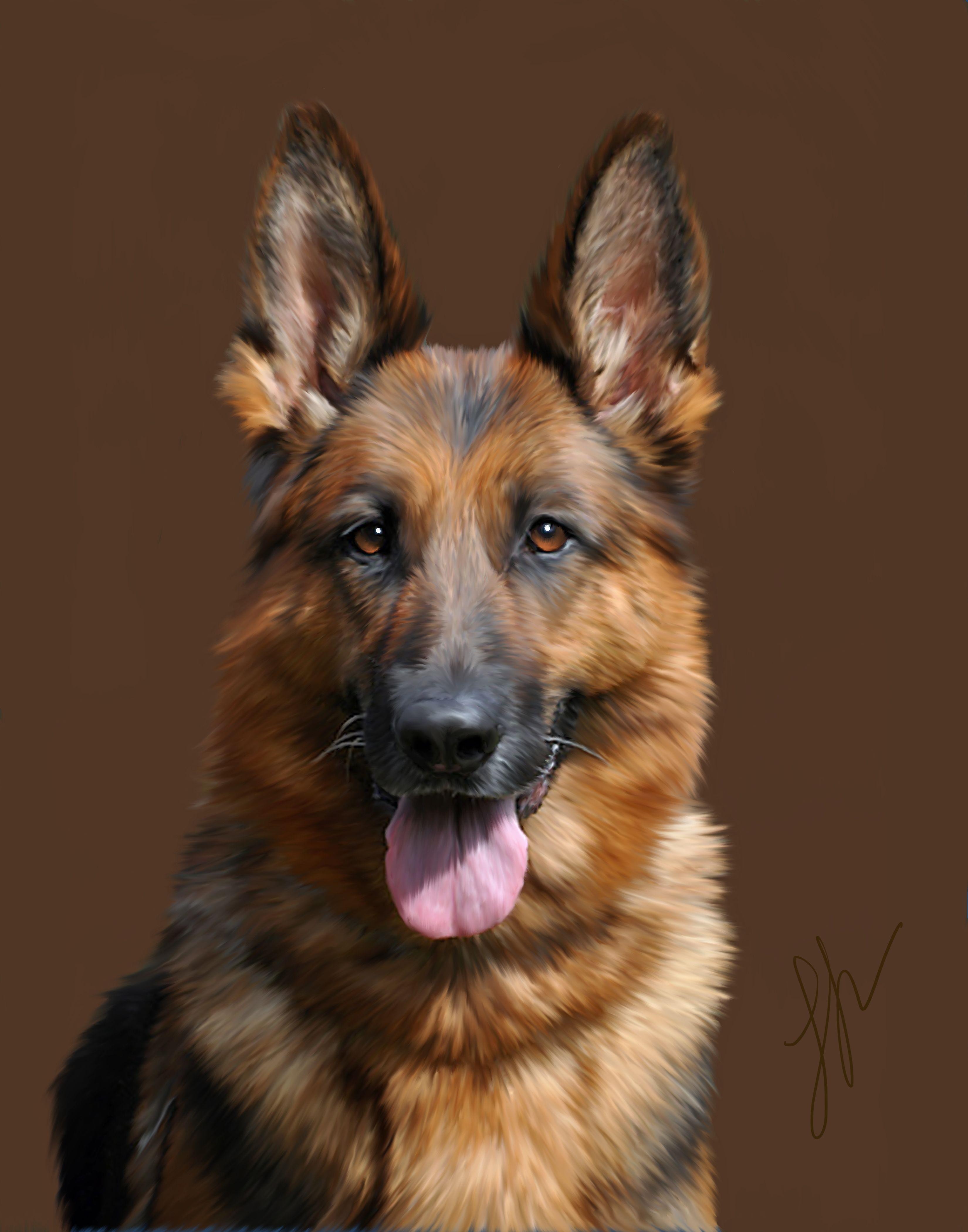 Portrait of a German Shepherd Pet Portraits By Me