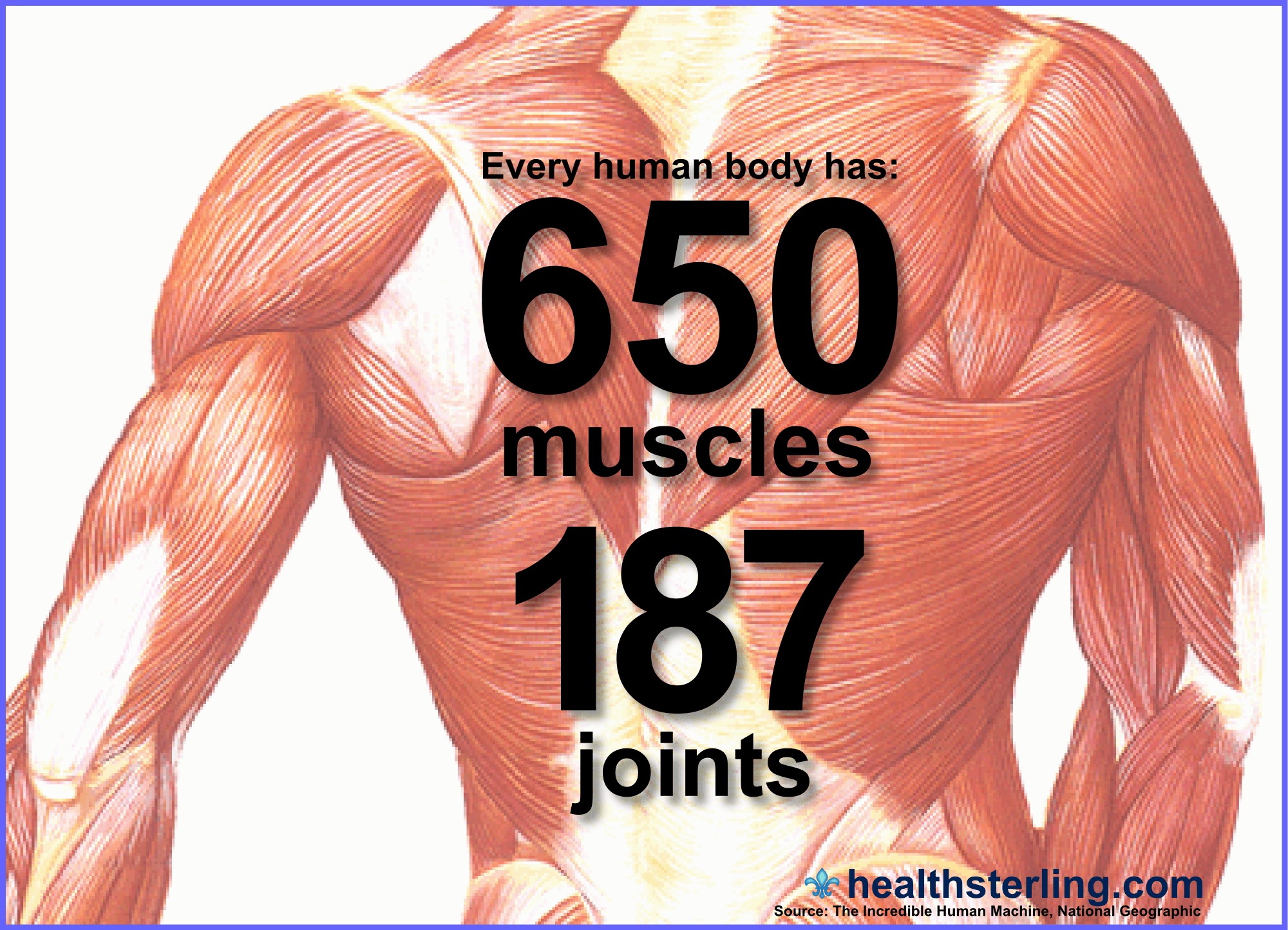 Your Body Is Amazing Over 650 Skeletal Muscles Working