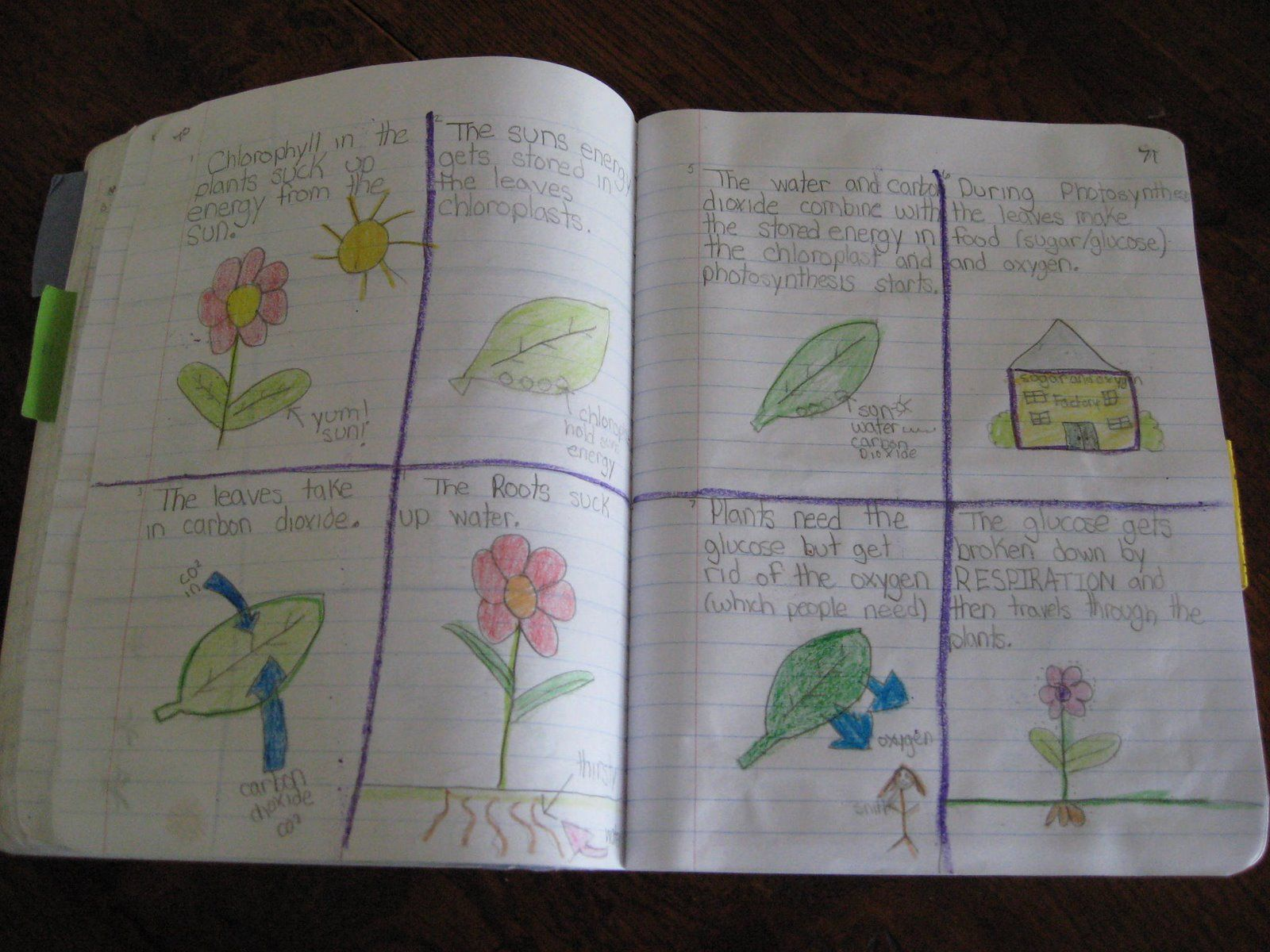 C1 W12 Great Photosynthesis Explanation Biology/physics