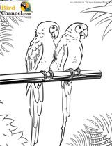 coloring pages coloring and birds on pinterest