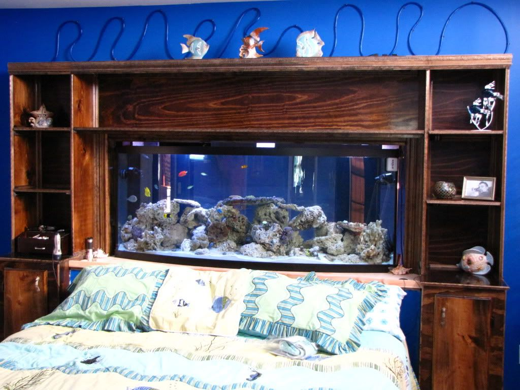 Image detail for Here's a pic of my Headboard fish tank