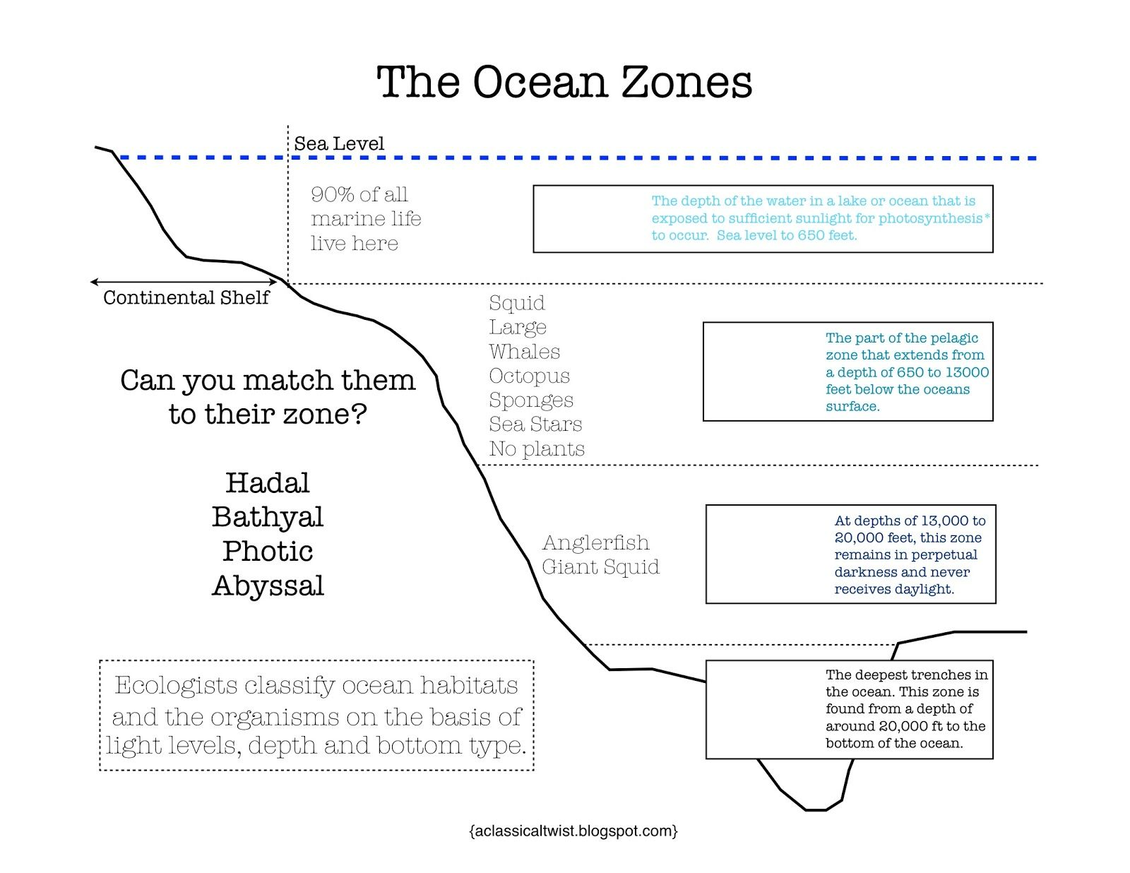 Here S A Nice Printable On The Ocean Zones Answer Key Can