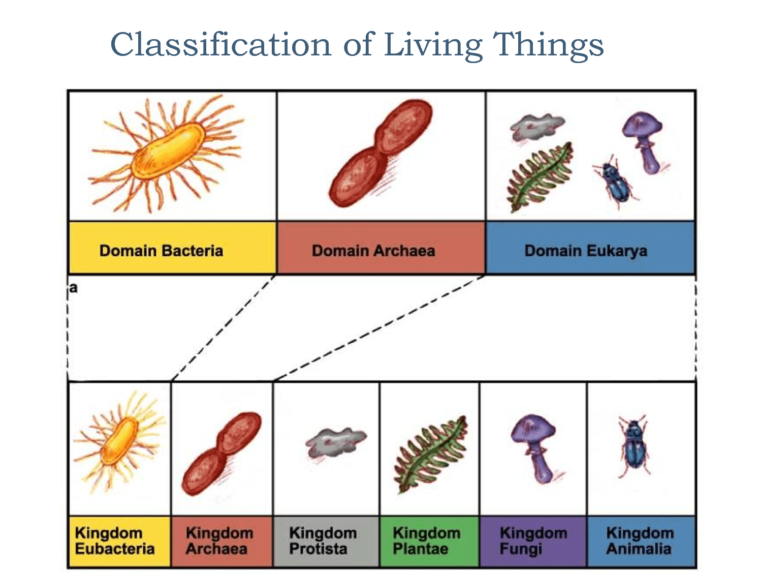 Classification Of Living Organisms