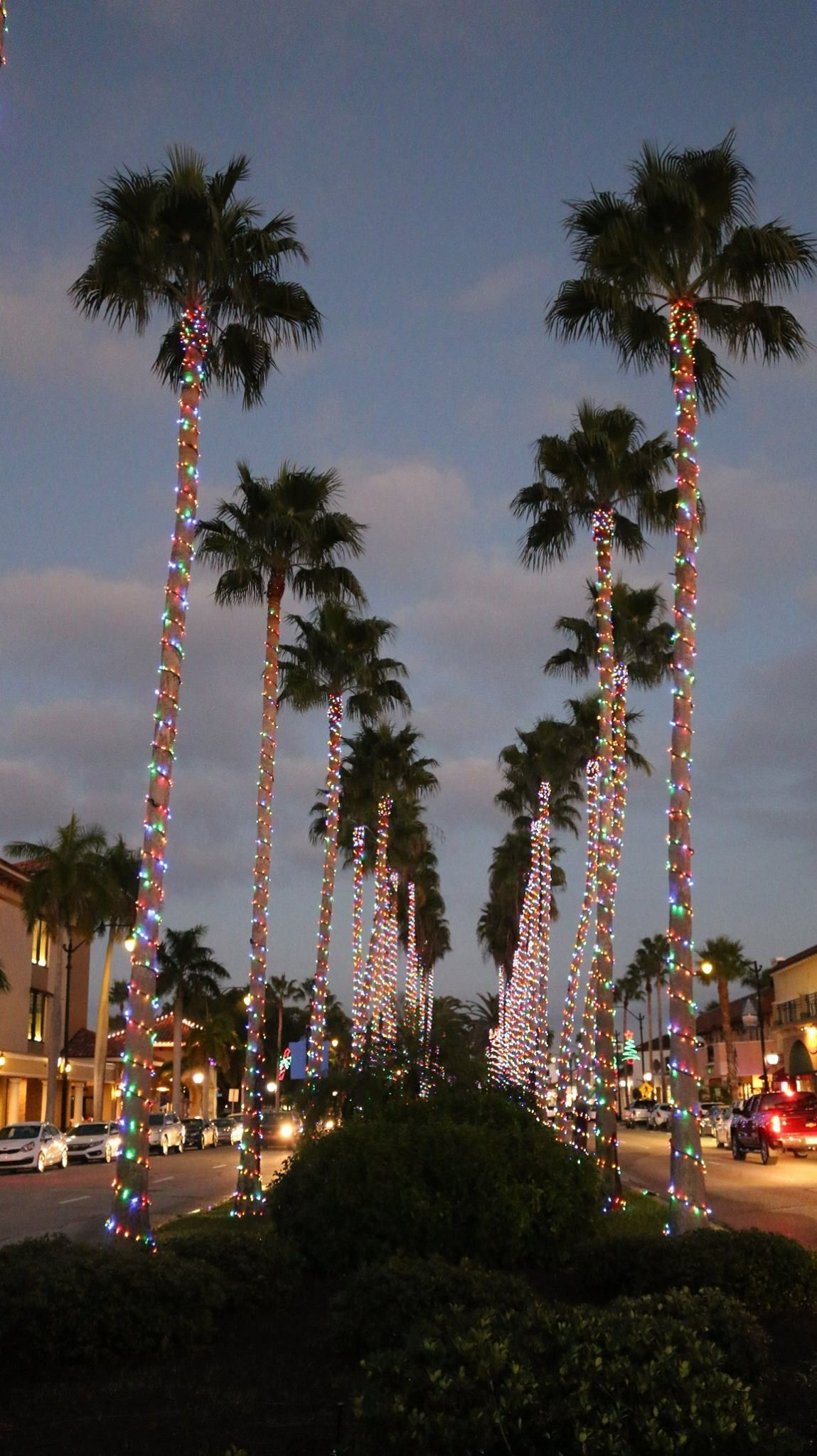 Christmas in Venice, FL Dream Vacations And Favorite