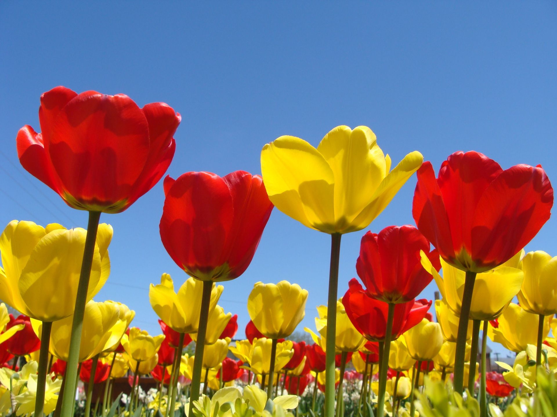 Spring Flowers Background Spring Flowers Wallpapers in