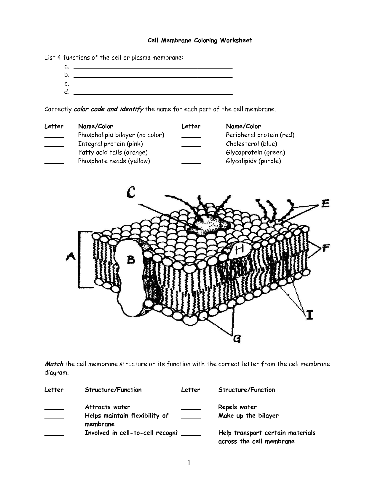 Cell Membrane Worksheet