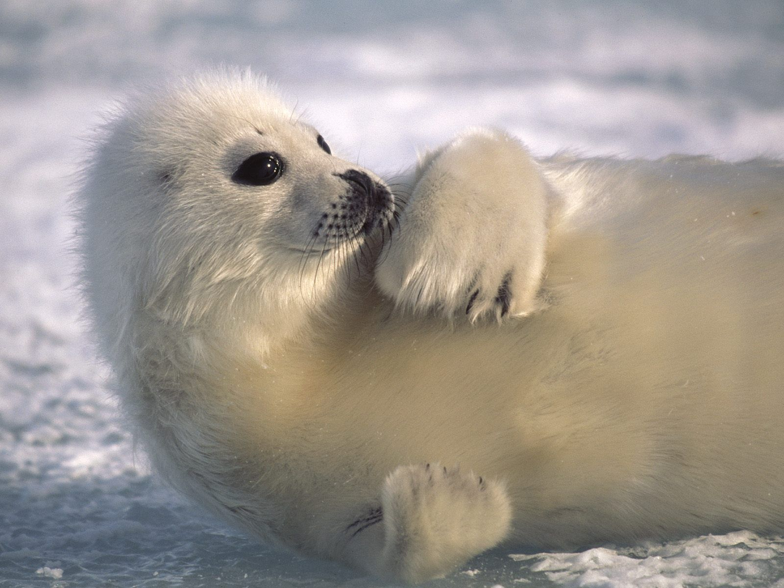 Ocean Animal Pictures - Google Search