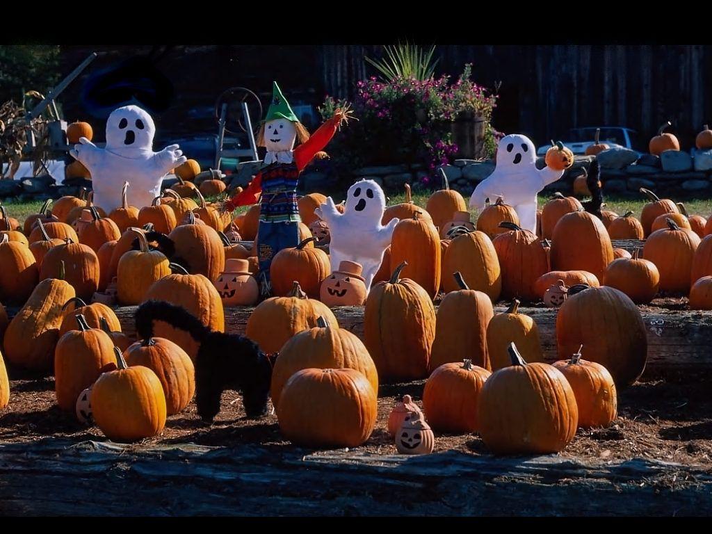 Halloween Screensavers Free Free Halloween Pumpkin Patch