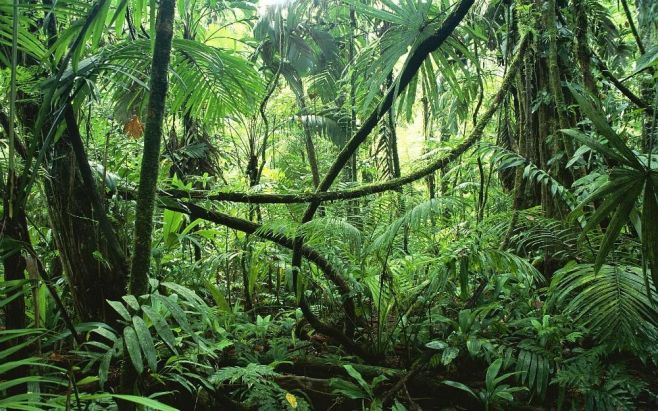 Image result for pictures of south american jungle