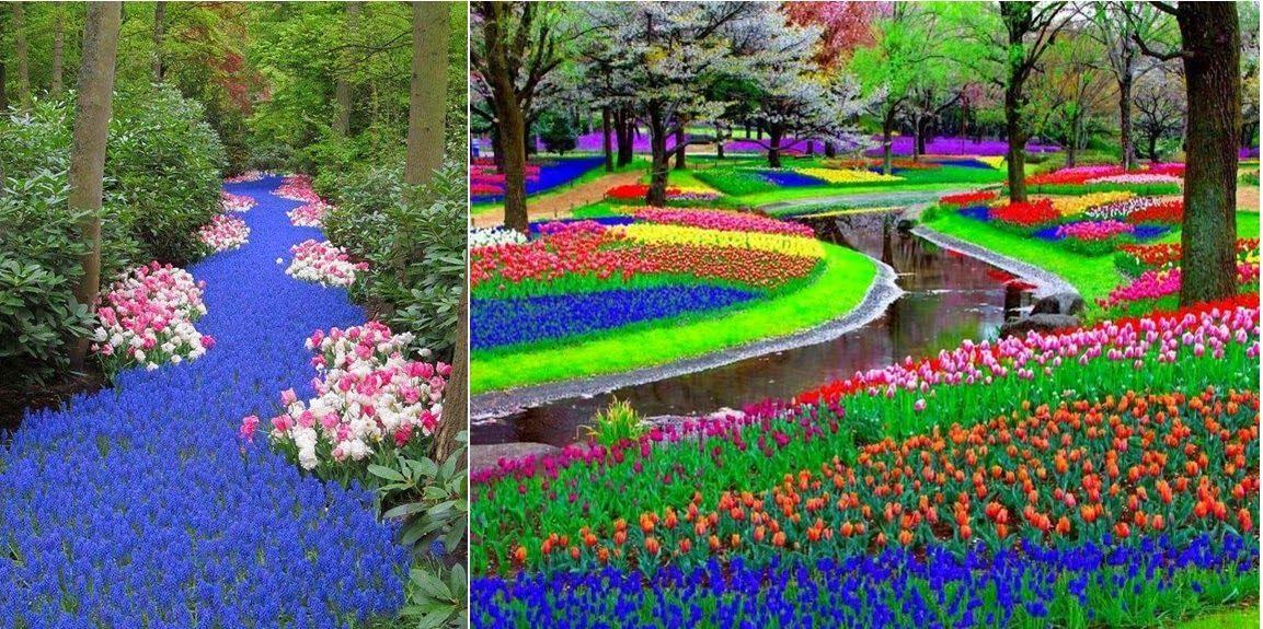 Netherlands, Keukenhof, in Lisse The Garden of Europe
