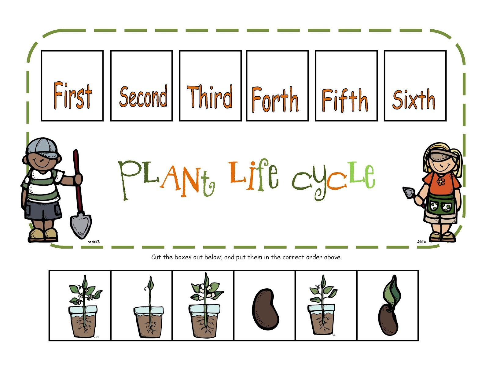 Preschool Printables Plant Life Cycle