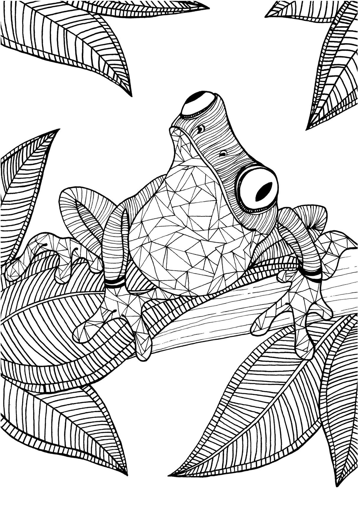 Frog adult colouring page Colouring In Sheets Art