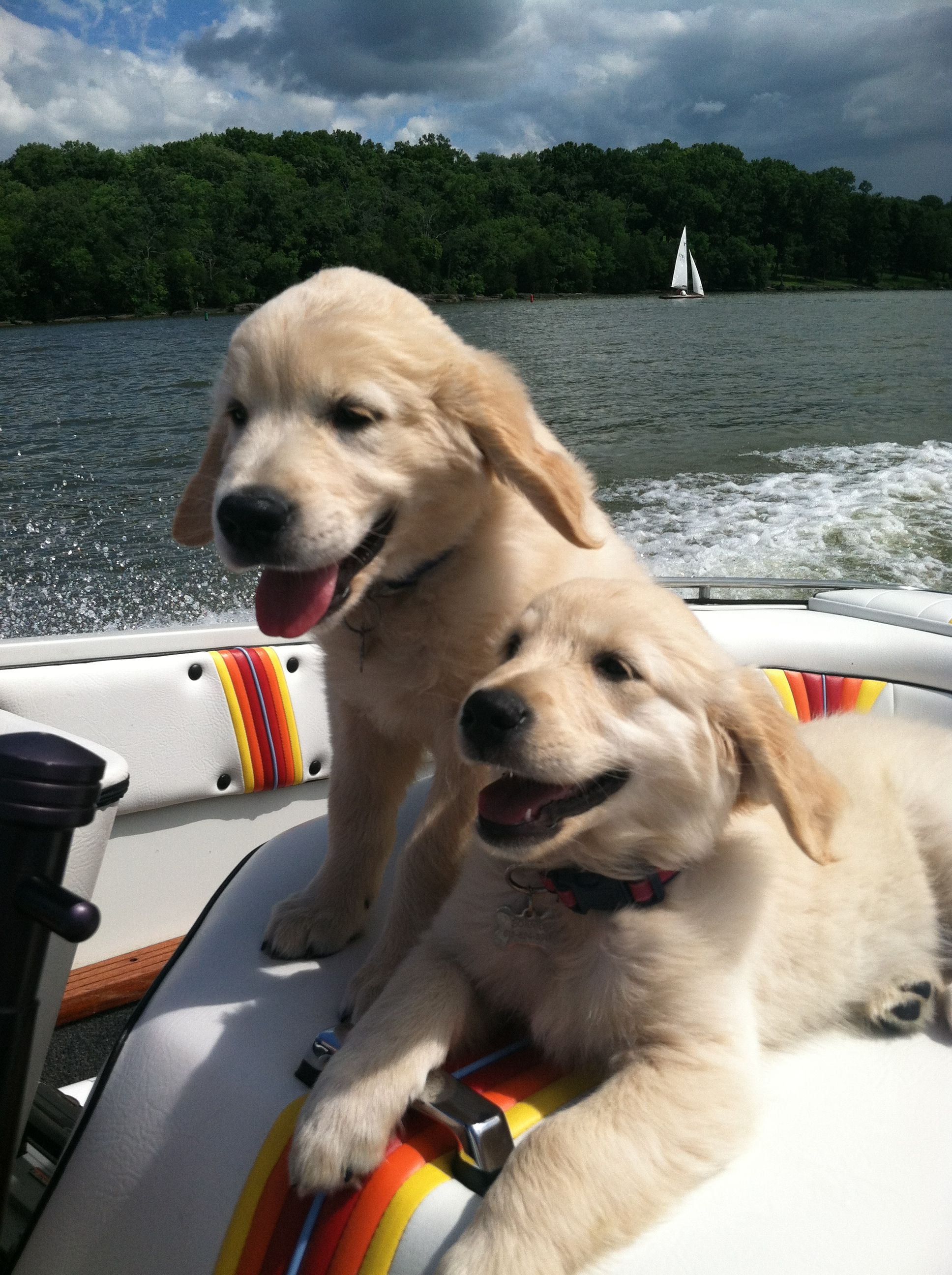 Happy boating puppies. Dogs Pinterest Boating, Dog