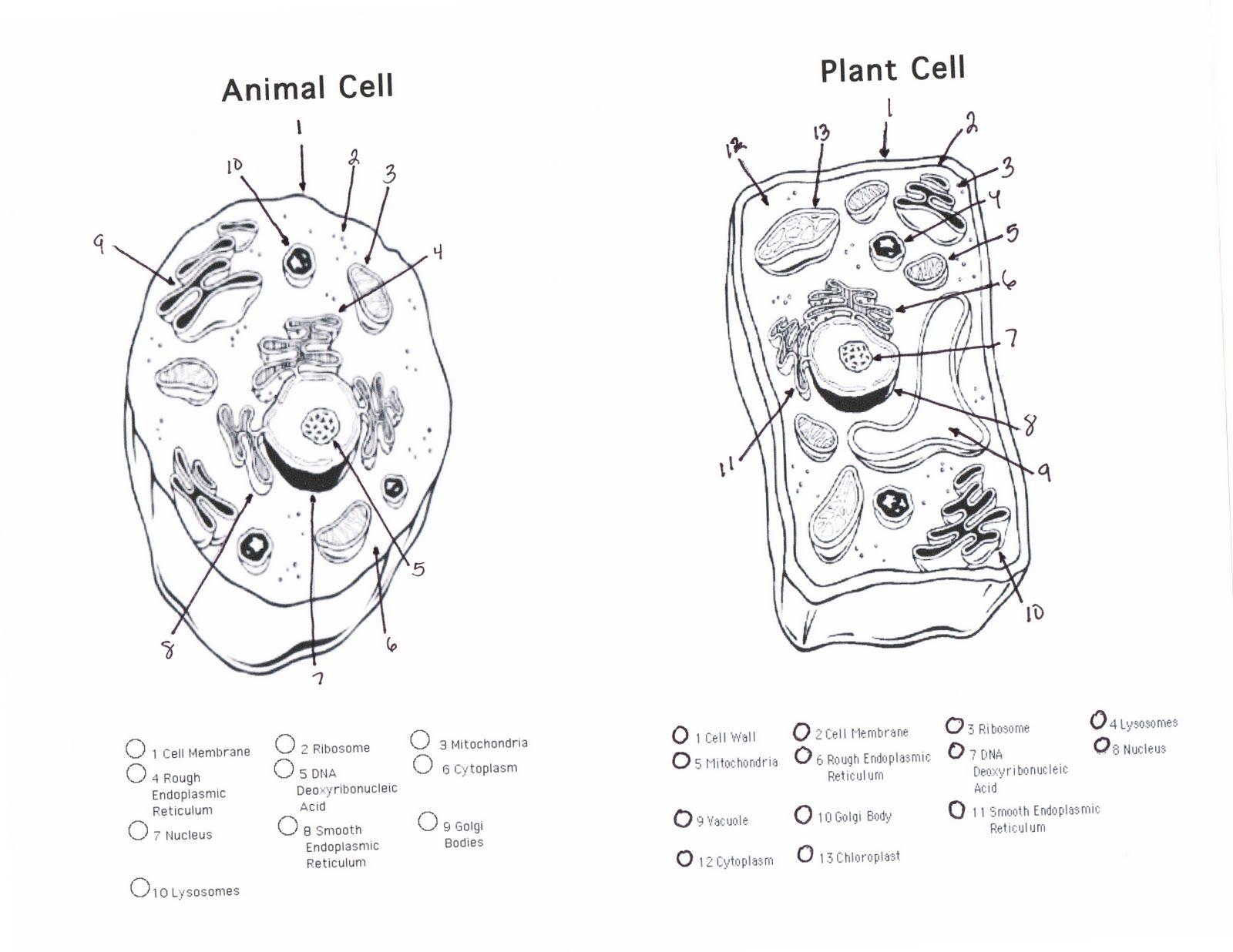 Printable Plant And Animal Cell