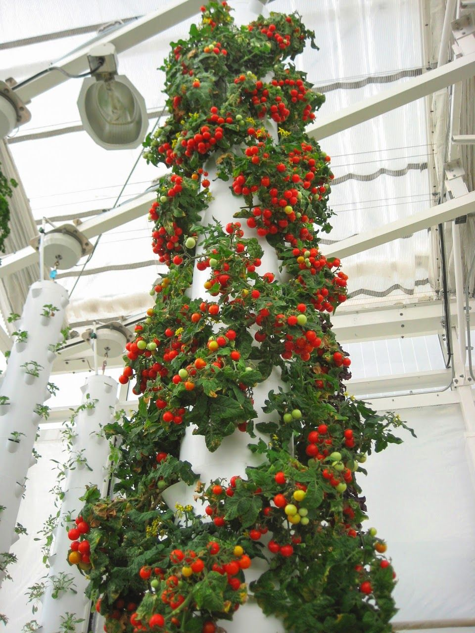 60 Tomato Plants grown in a single Tower Garden! http