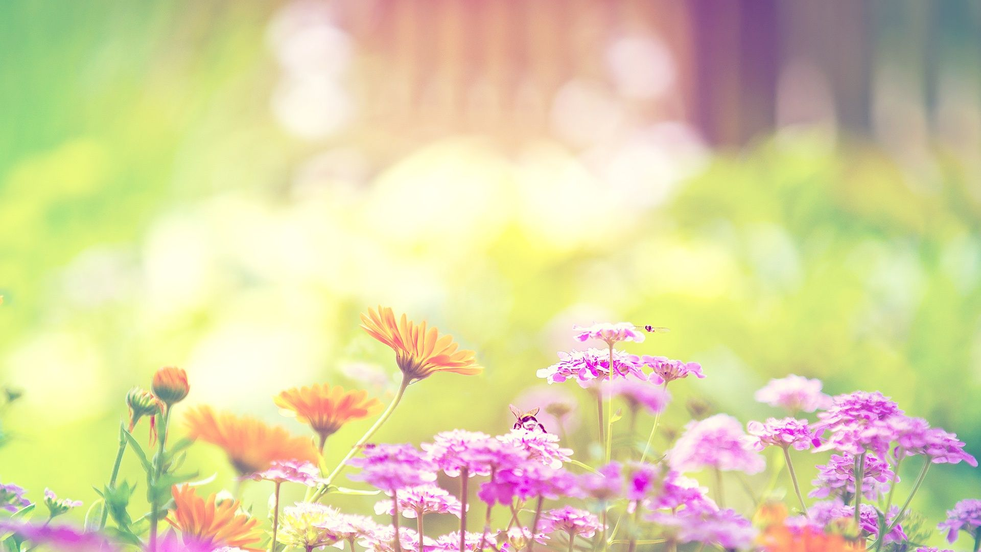 Pretty Flowers Backgrounds Tumblr LOL Pinterest