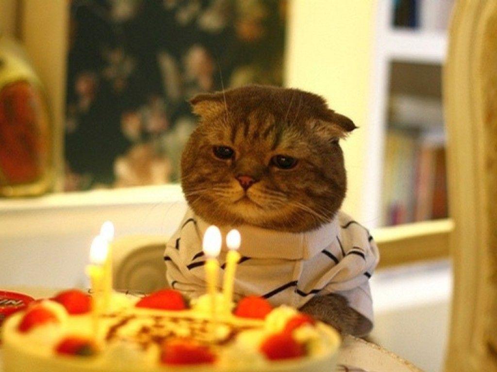 birthday party cat, birthday sweater | animals | pinterest | cat