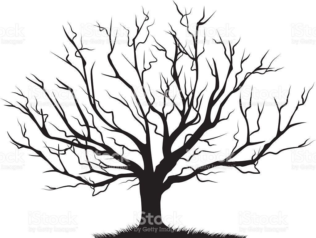 Deciduous Bare Tree Empty Branches Black Silhouette