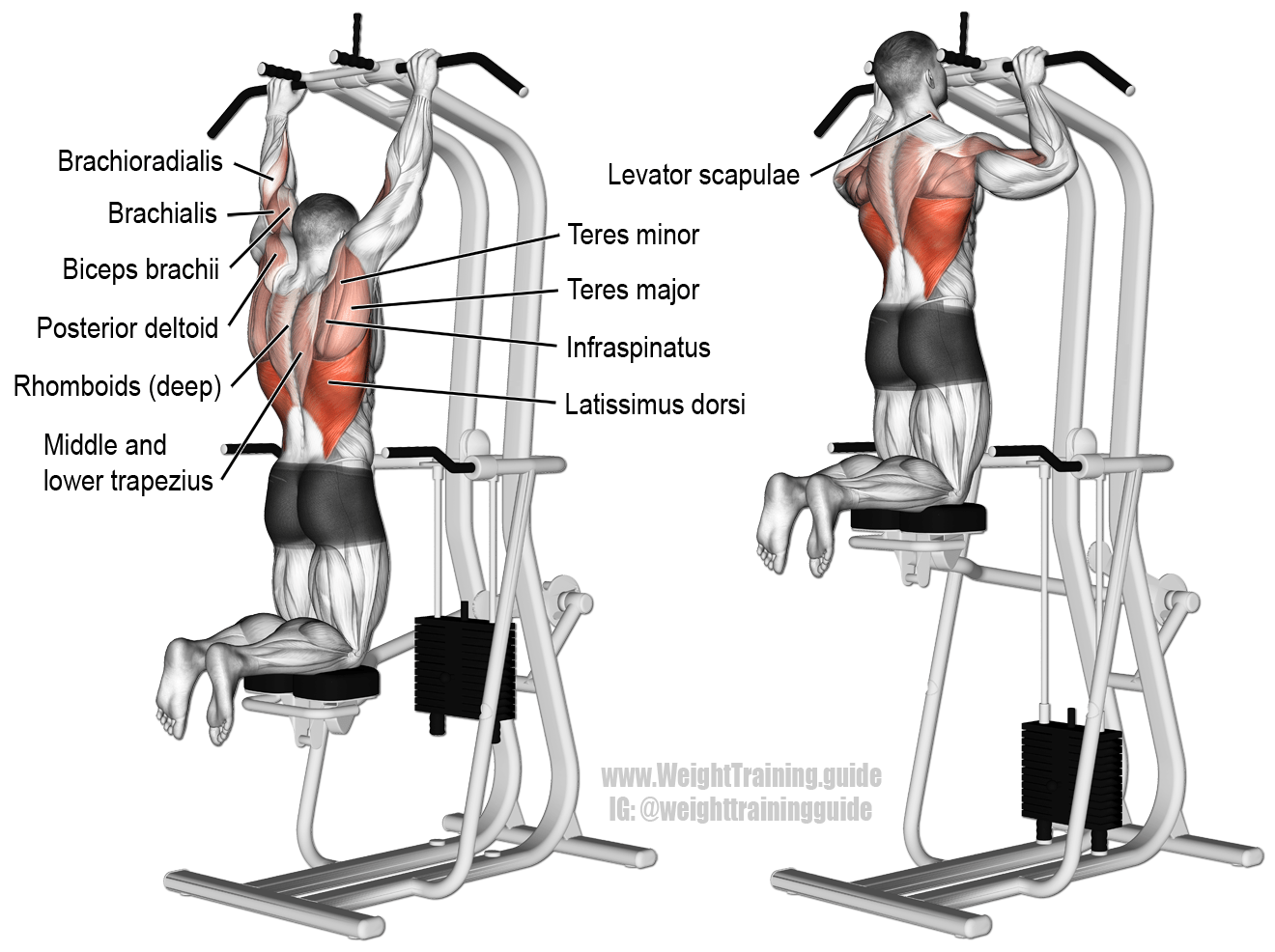 Assisted Pull Up A Compound Exercise Target Muscle Latissimus Dorsi Synergistic Muscles