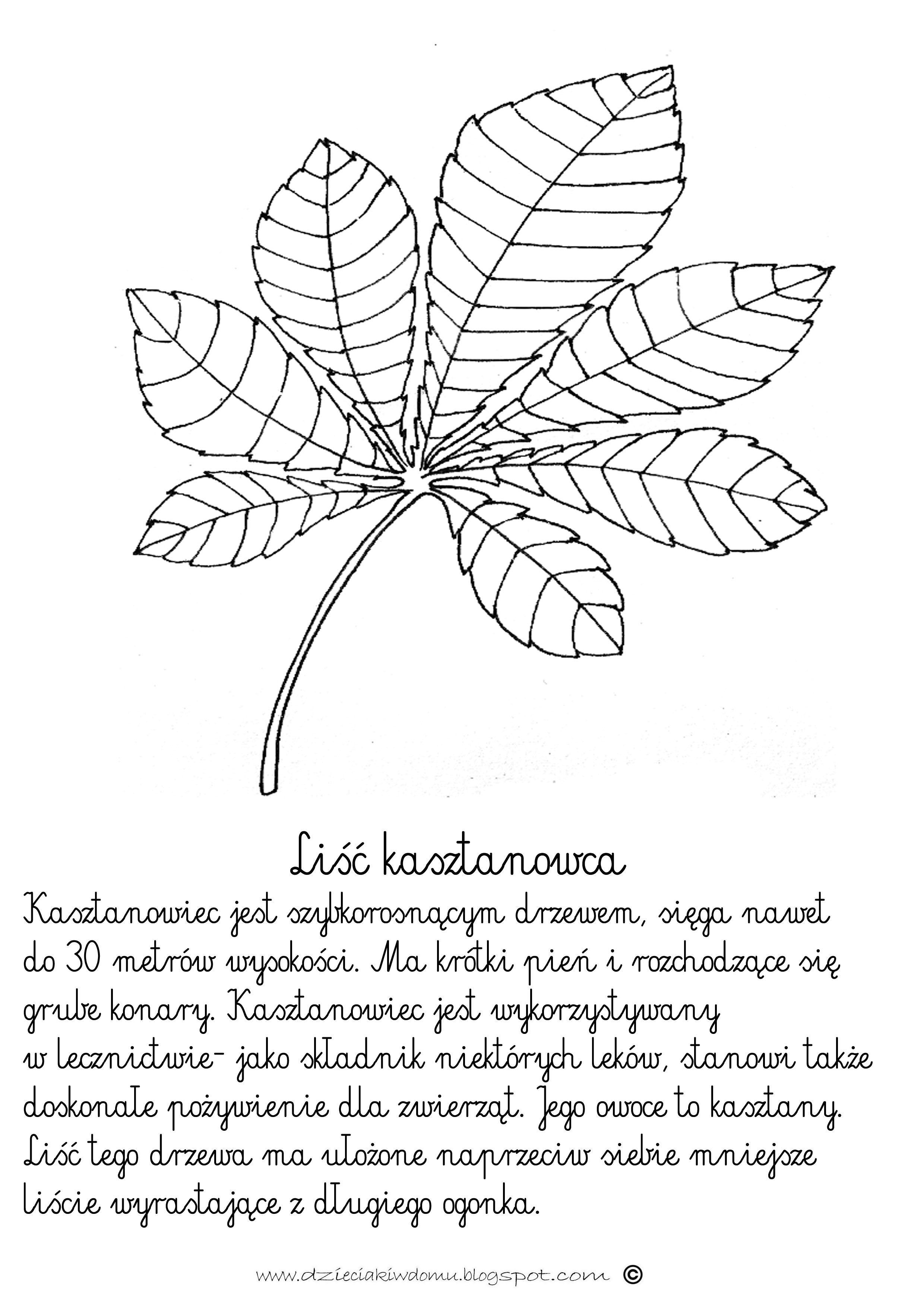 Li Kasztanowca Ieciakiwdomuspot
