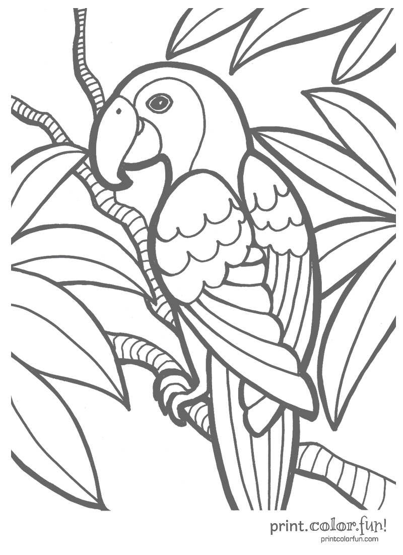 Parrot Print Color Fun Free Printables Coloring Pages