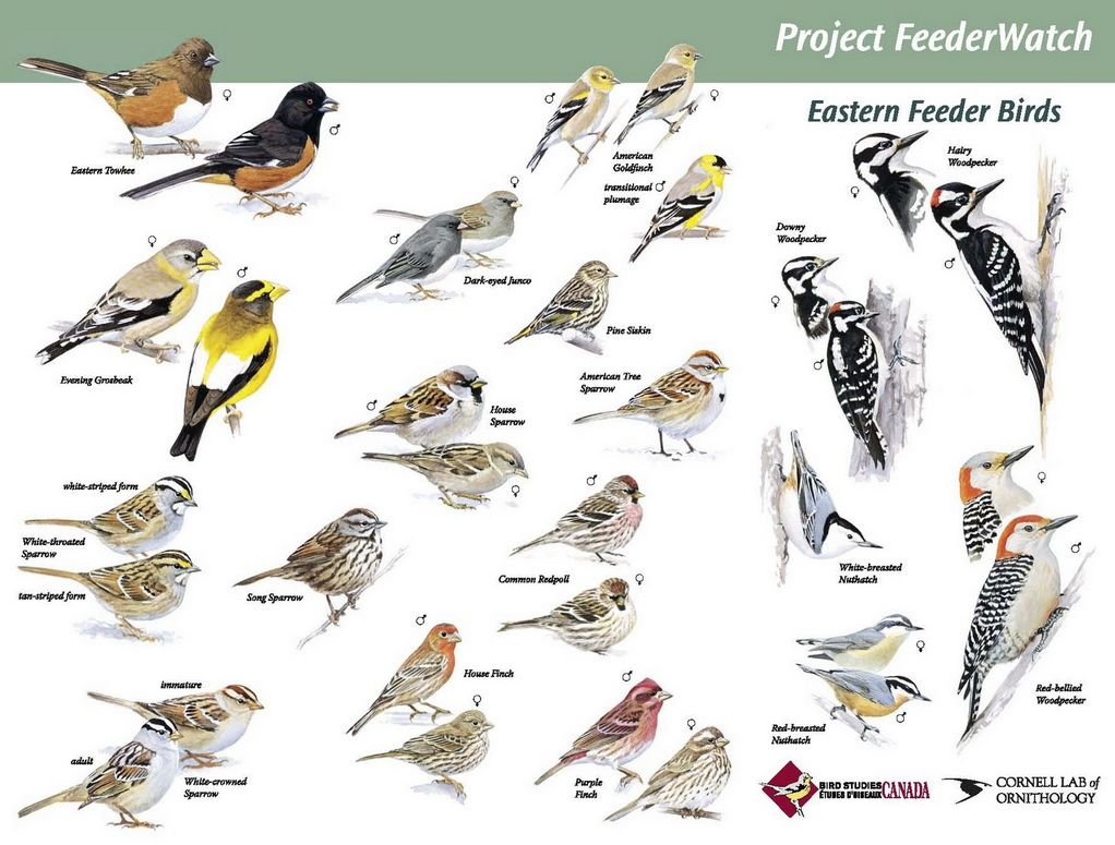 Wild Birds of the Southeast field guide Archives Happy