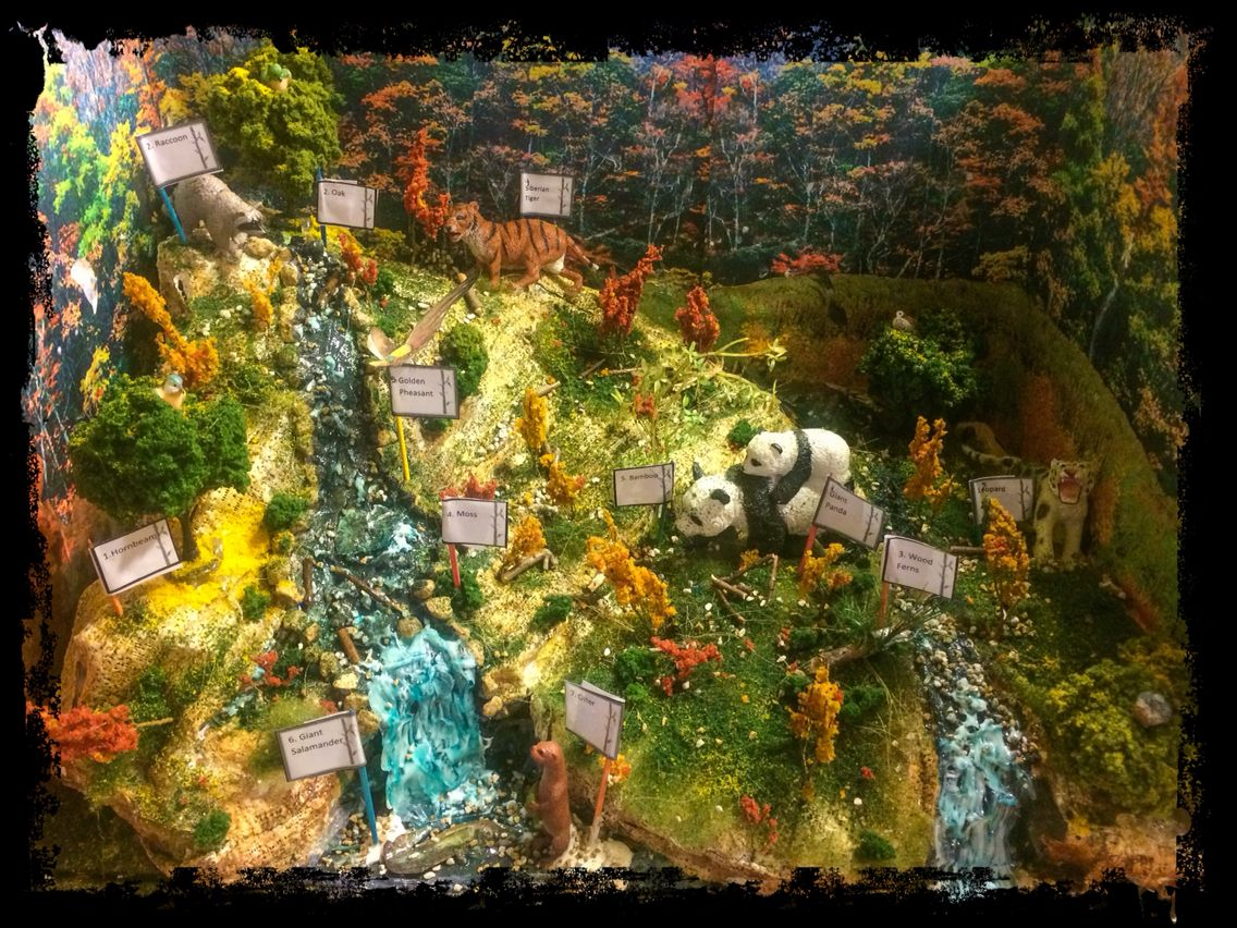 Diorama Of Chinese Temperate Deciduous Forest 5th Grade