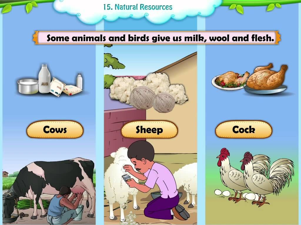 Manmade V Natural Resources Video Could Be Used As A Hook When First Presenting The Unit