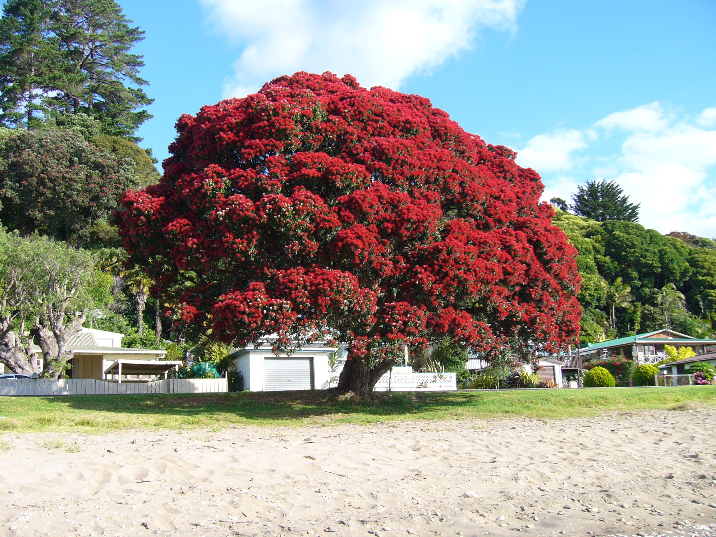 10 Things I Love About New Zealand Christmas tree