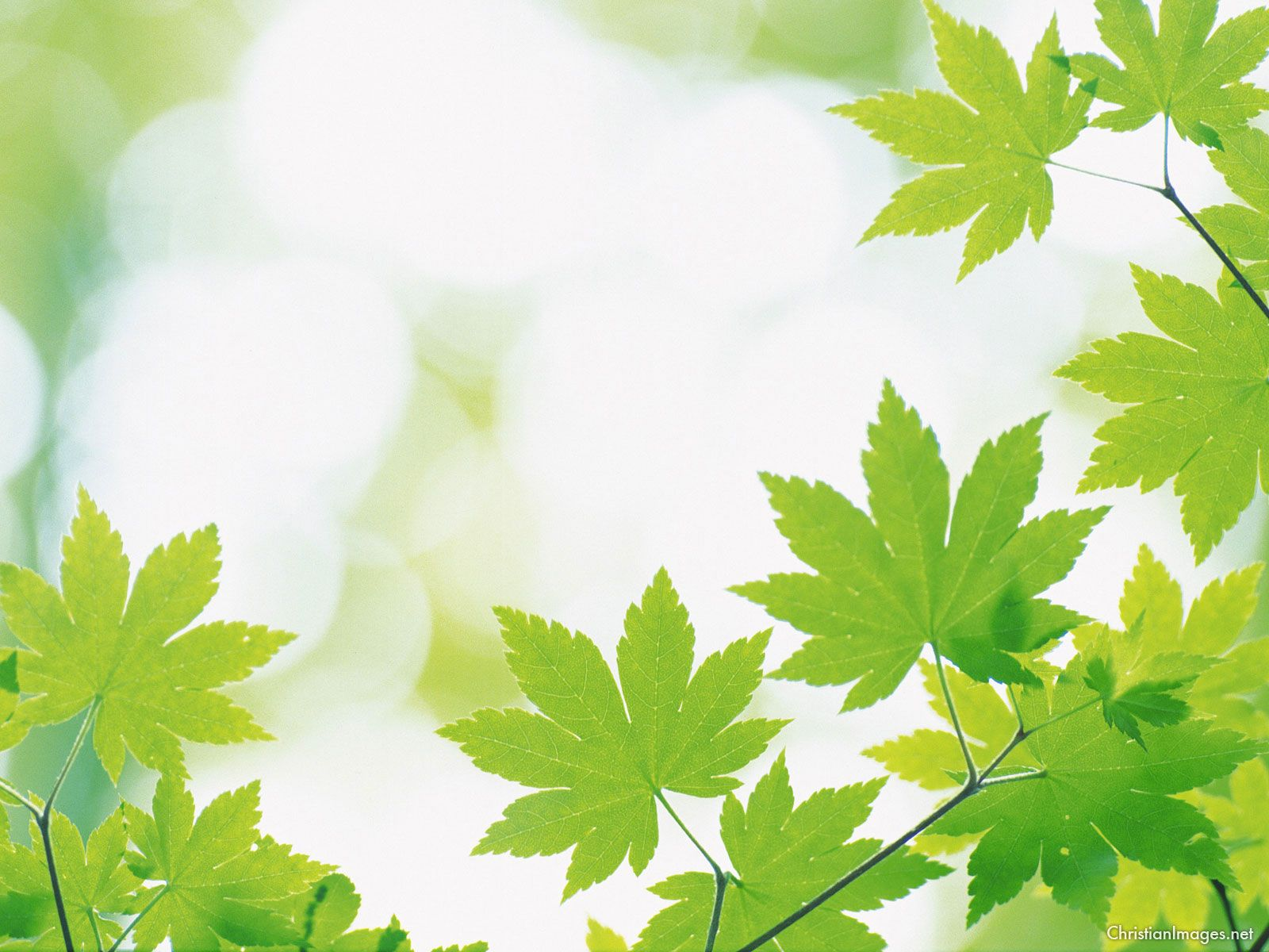 Leaves Powerpoint Background PowerPoint Backgrounds