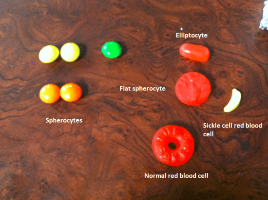 EDIBLE (candy) BLOOD CELLS Science Ideas Pinterest