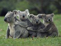 faune australie
