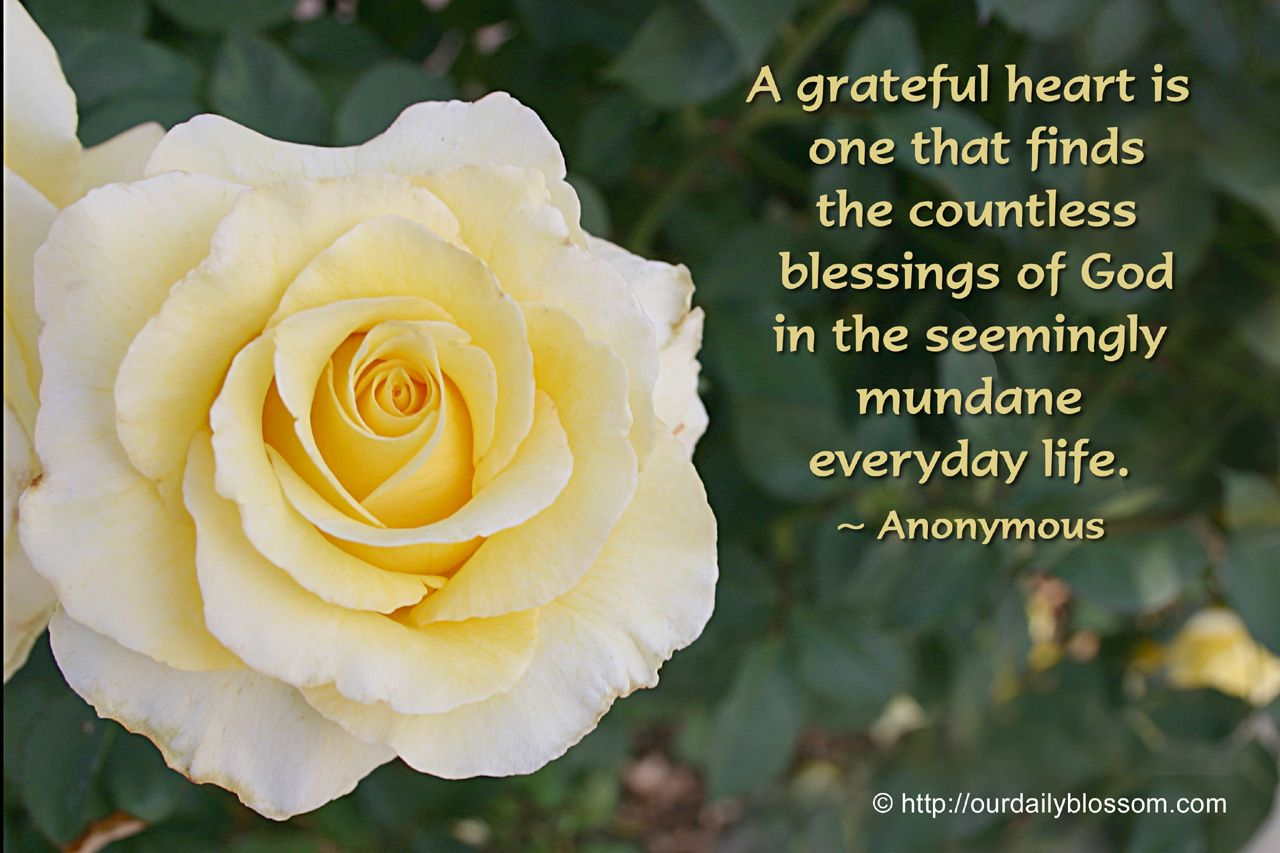 View Full Size (1280 x 853) A grateful heart is one that