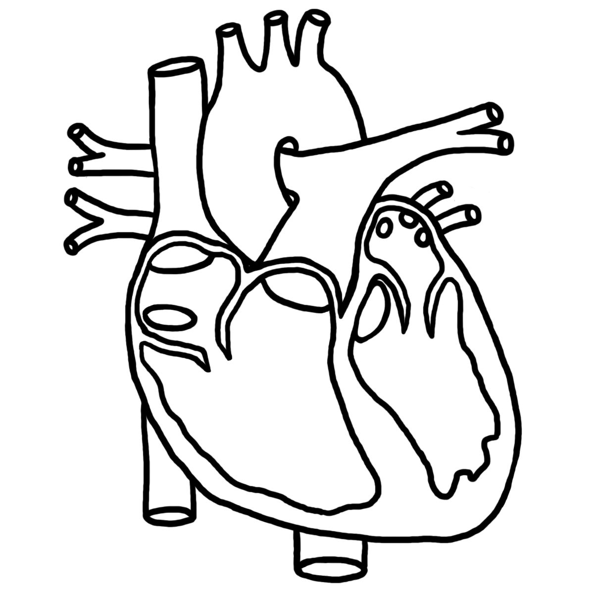Name All Parts Of The Heart
