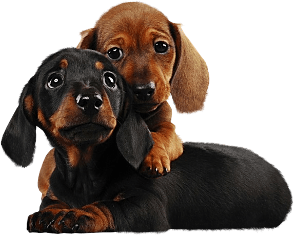 Two Cute Puppies PNG Clipart gif pes Pinterest Cute